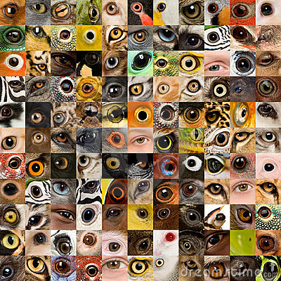 121 animal and human eyes