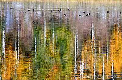 13 ducks on golden pond