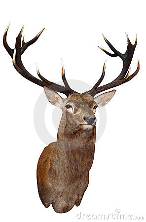 Free 14 Point Sika Stag S Head Stock Photography - 11223902