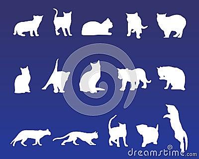 15 cat vectors