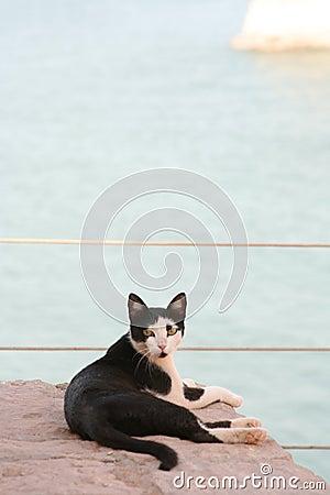 2只猫红海凝视