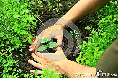 2种植的结构树