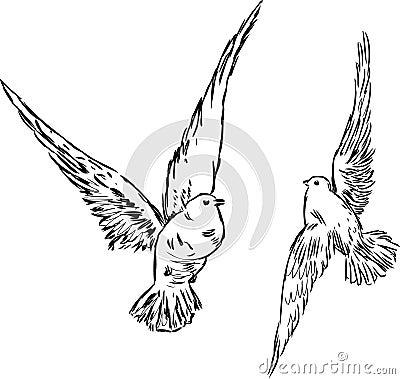 2 голубя