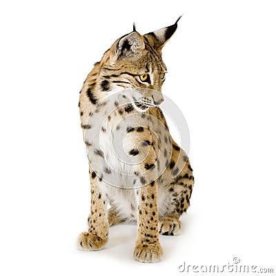 2 лет lynx