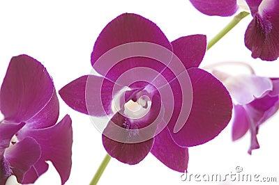2 орхидеи