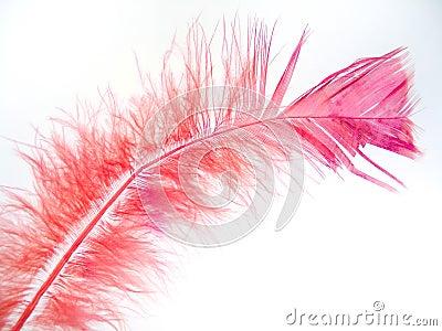 2根羽毛粉红色