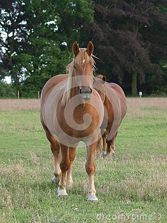 2 лошади