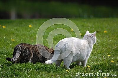 2 cats on leer