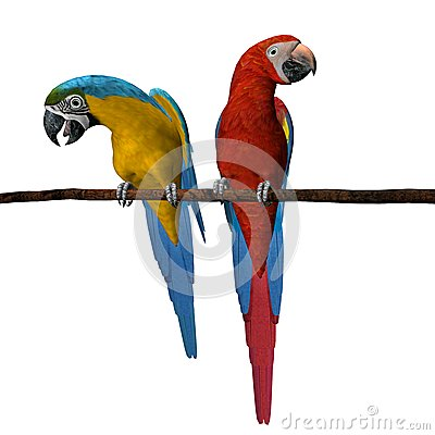 2 Colorful Macaws Perched Stock Image - Image: 26021551