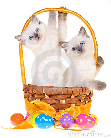 Free 2 Cute Easter Ragdoll Kittens Stock Photos - 12417873