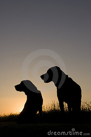 2 dogs at sunrise