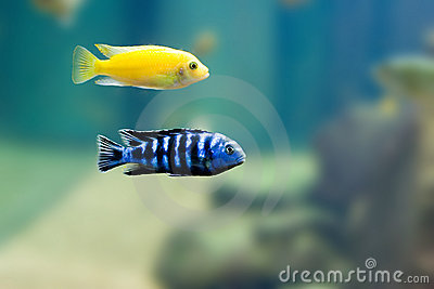 2 Exotic fish