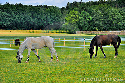 2 horses eating grass near Schloss Fasanarie