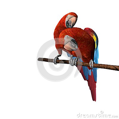 2 Macaws Perched and Preening