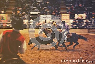 2 Men Riding On Horse Free Public Domain Cc0 Image