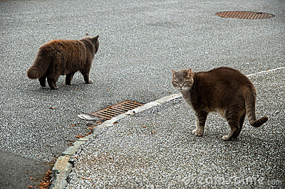 2 soft fluffy brown cats