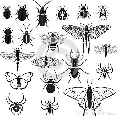 Free 20 Vector Images Of Insects Stock Photo - 37498950