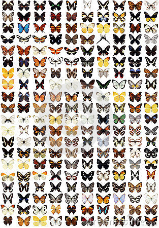 200 different butterflies