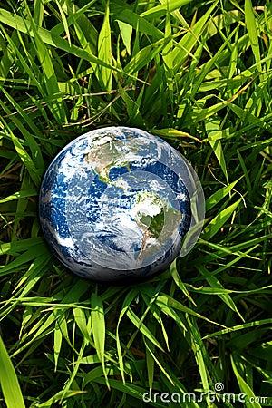 丢失的地球草