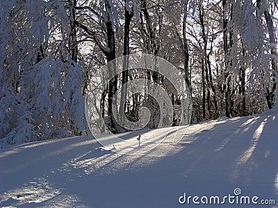 保加利亚雪阳光