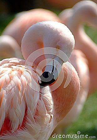 理想的粉红色