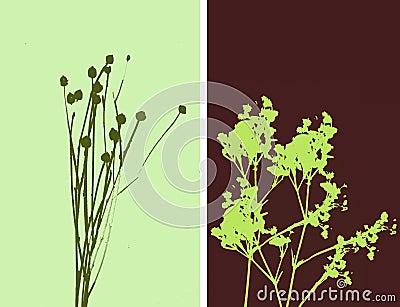 2flowers - illustration