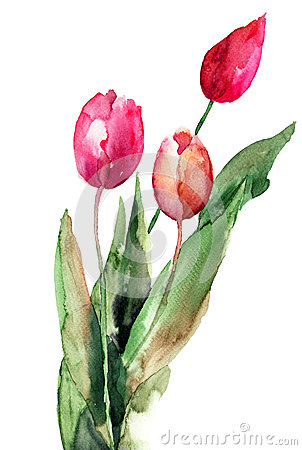 3 цветка тюльпанов