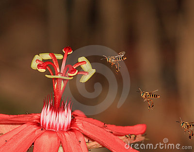 3 Bees and a Red Flower