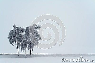 3 birches