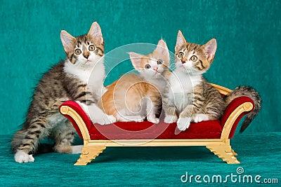 3 Cute kittens on mini sofa