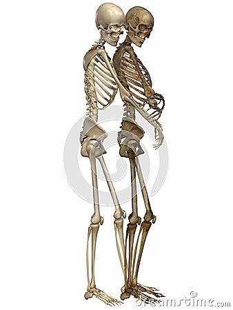 3 D Skeletons - Friends for ever