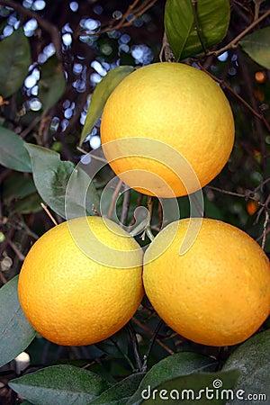 3 naranjas