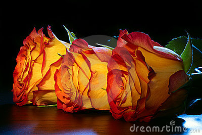 3 orange roses on a table.