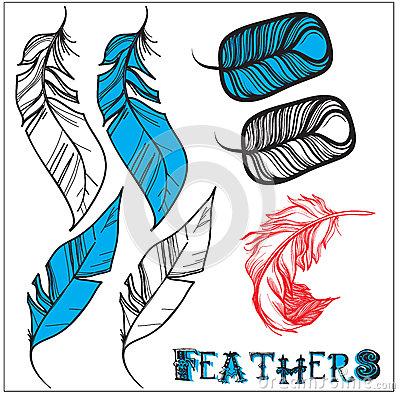 3 variants of bird feathers