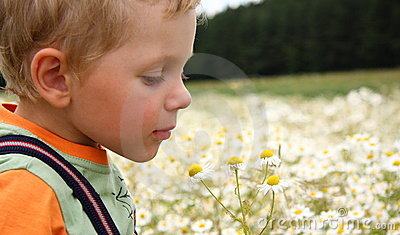 3 years boy smelling daisy