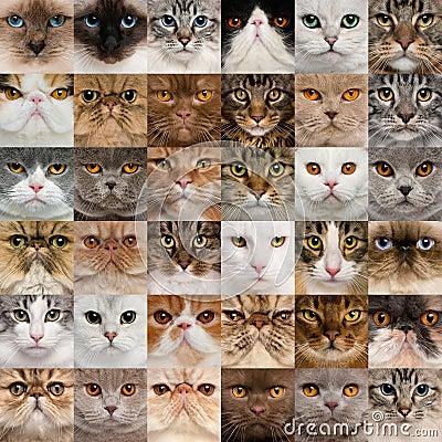 36 cat heads