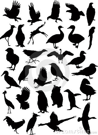 37 vector bird silhouettes