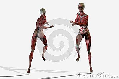 3D body anatomy