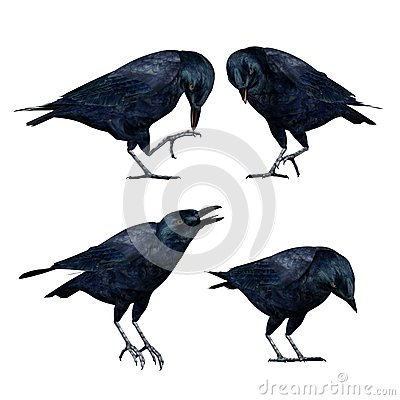 3D Crows Isolated