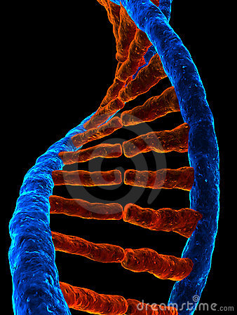 Free 3d Gene Royalty Free Stock Photography - 4368777