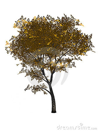 3D Generated Yellow Mapple Tree
