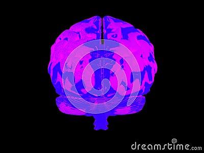 3d menselijke hersenen