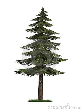 3D Model of Fir Tree