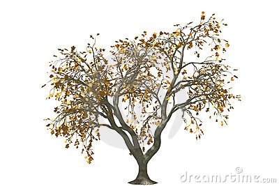 3d oak tree render with gold leaf
