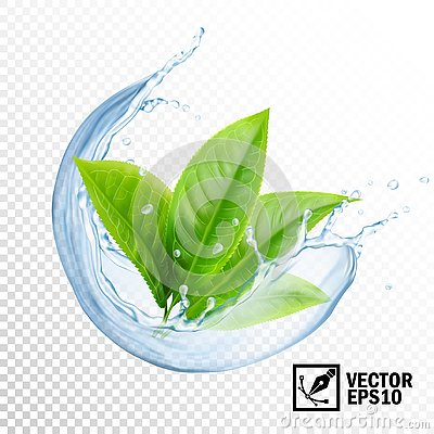 Free 3D Realistic Transparent Vector Splash Of Water With Leaves Of Tea Or Mint. Editable Handmade Mesh Stock Photos - 128075963