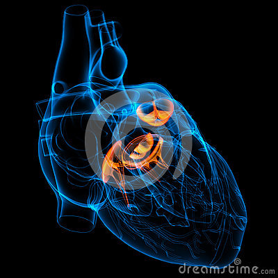 Free 3d Render Heart Valve Stock Photo - 34264300