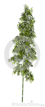 Free 3D Rendering Bamboo Tree On White Stock Photography - 81133822