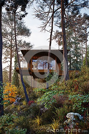 Free 3D Rendering Wooden House Treehouse In Woods Morning Stock Photos - 109313653
