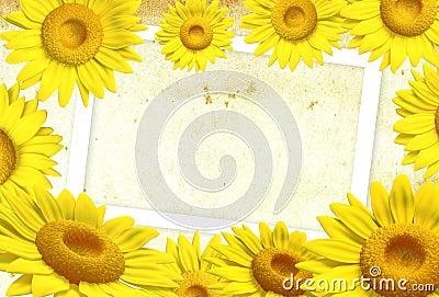 3D sunflower frame