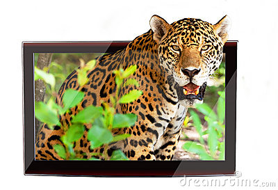 3D wildlife TV